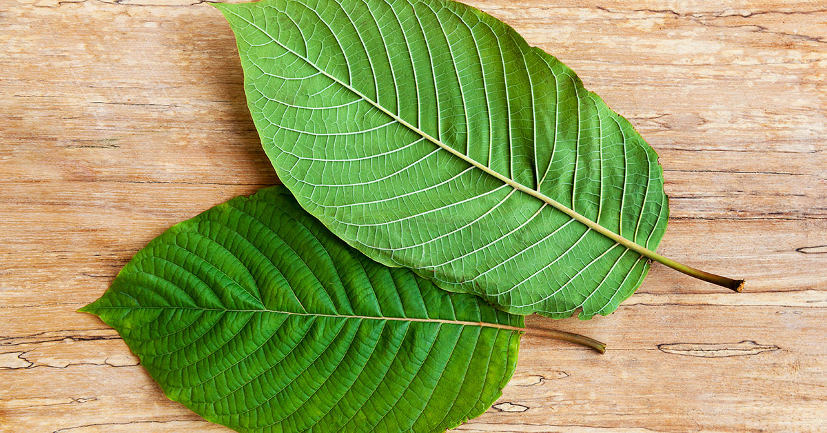Kratom_Leaves-1200x628-Facebook